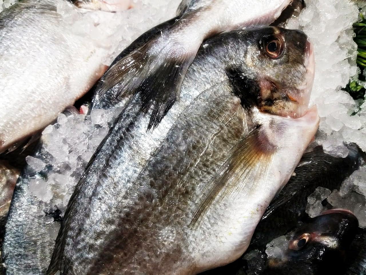 Przepisy na potrawy z ryb